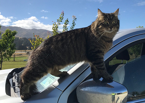 18012018_cat2.jpg