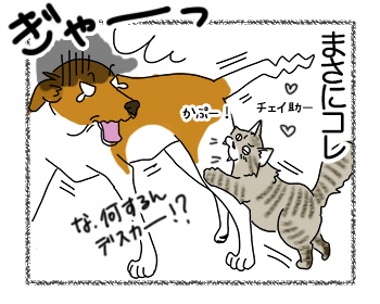 18022018_cat4.jpg