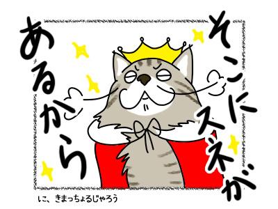 18022018_cat5.jpg