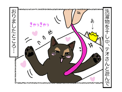 19022018_cat1mini.jpg