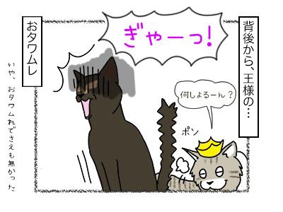 19022018_cat2mini.jpg