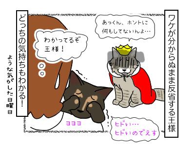 19022018_cat4mini.jpg