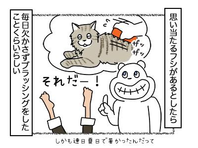 20022018_cat3mini.jpg