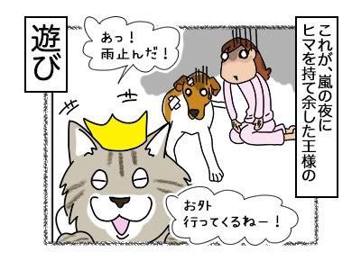 21022018_cat7.jpg