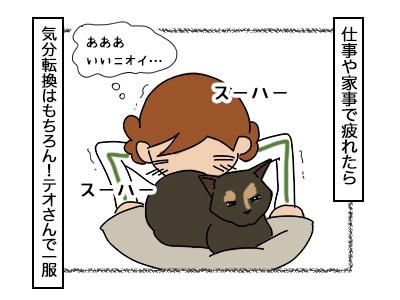 22022018_cat1.jpg