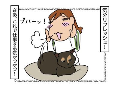 22022018_cat2.jpg