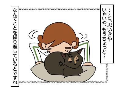 22022018_cat3.jpg