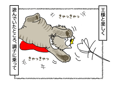 23022018_cat1.jpg