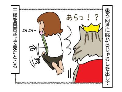 23022018_cat2.jpg