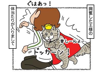 23022018_cat3.jpg