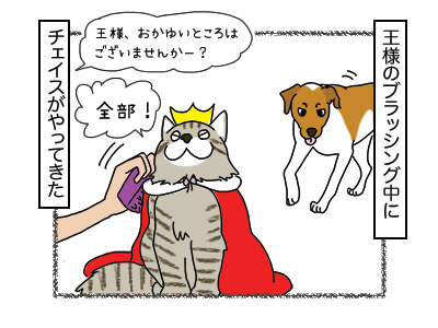 24012018_cat1mini.jpg