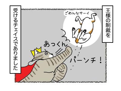 24012018_cat4mini.jpg