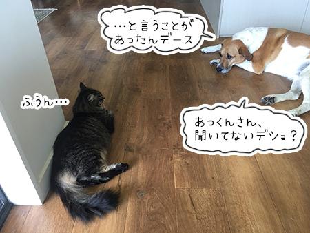 24022018_cat3.jpg