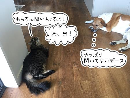 24022018_cat4.jpg