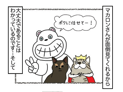 25012018_cat3mini.jpg