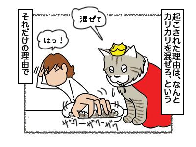 26022018_cat3mini.jpg