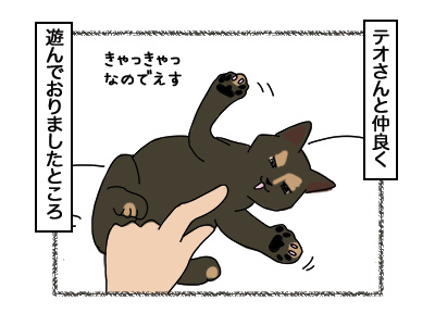 27022018_cat1.jpg