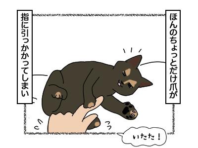 27022018_cat2.jpg