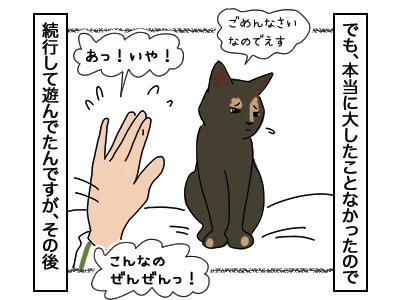 27022018_cat3.jpg