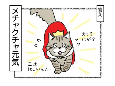 29012018_cat4mini.jpg