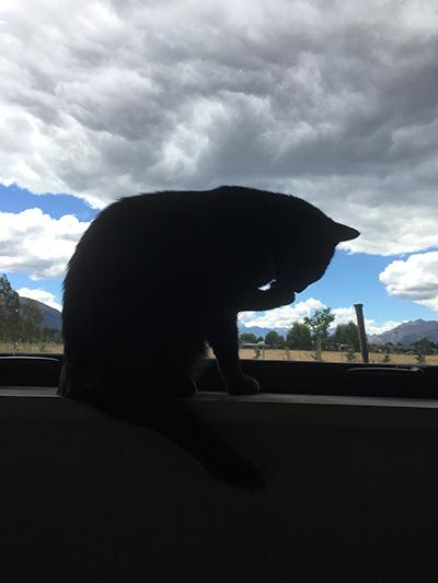 30122017_cat2.jpg