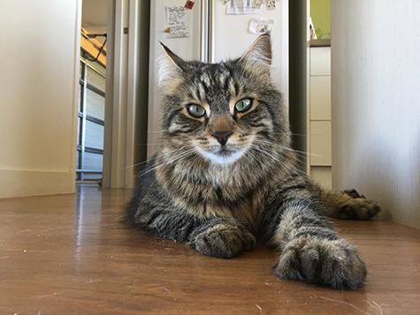 31122017_cat5.jpg