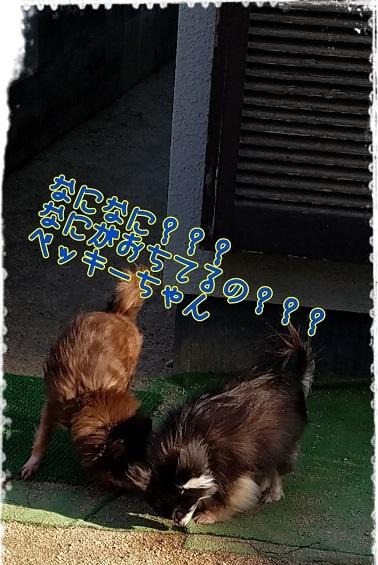 18-02-17-09-13-18-043_deco.jpg