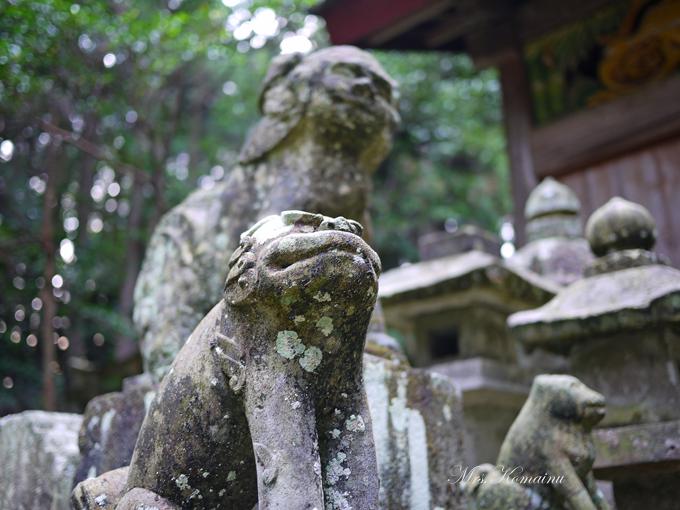 多藤神社_22