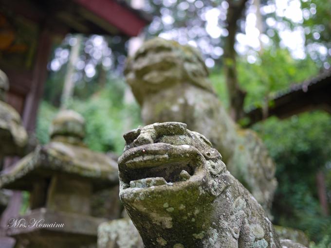 多藤神社_21
