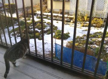 渦巻き柄「まり」の雪見