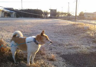 朝起きると一面霜が降りていた