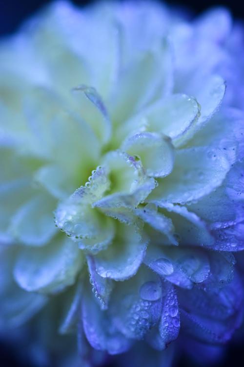 frost_17_12_20_9.jpg