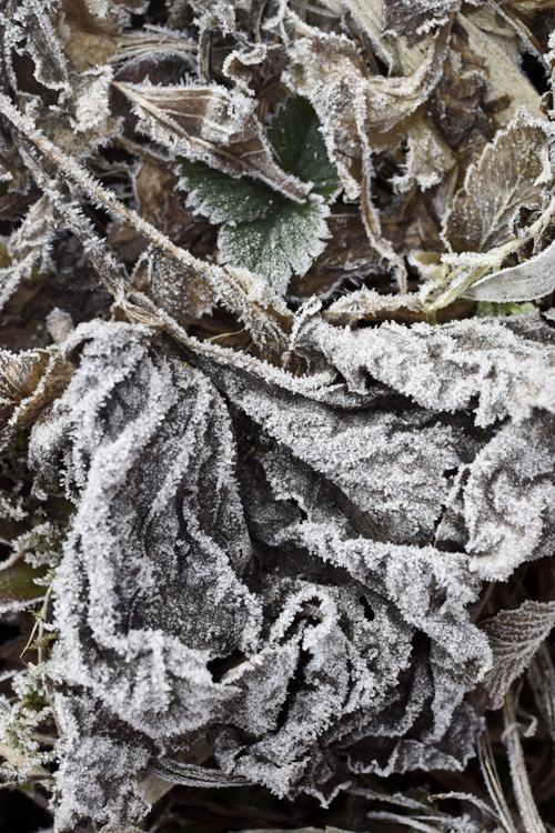 frost_18_2_9_2.jpg