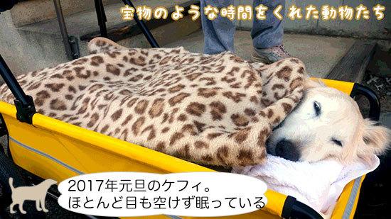 2017年元旦のケフィ。ほとんど目も空けず眠っている。