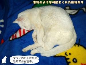 ケフィのお下がりの毛布でお昼寝中。
