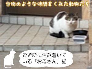 ご近所に住み着いている「お母さん」猫