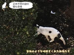 正体不明の謎の猫も登場