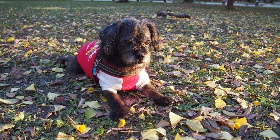 落葉とふうた 2017冬