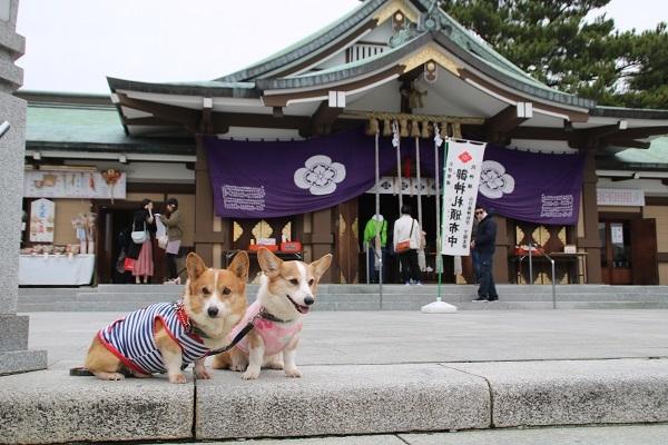 亀山神社 2018-1-5-4