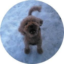 ⑨犬と残雪