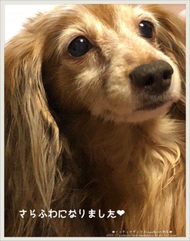 2018/01/29 風呂4