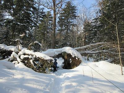 展望山登山道倒木