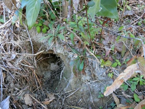 うさぎ巣穴