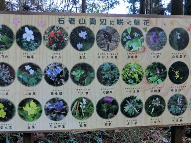 石老山の花
