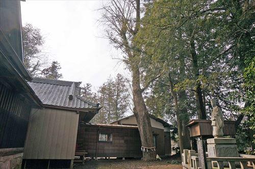 2神社の森