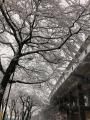 2018寒いよ雪だよ2