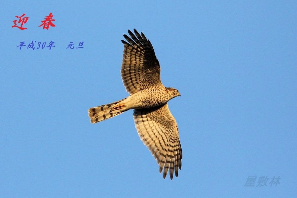 I01A1775-3.jpg