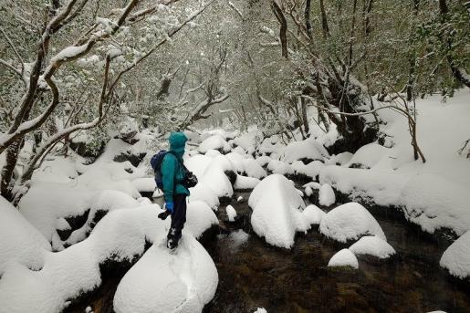1月12日 雪の白谷雲水峡