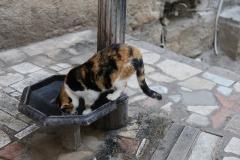 モンテネグロの猫 2匹