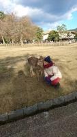 奈良に来ました(^-^)